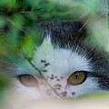 Watching Eyes by Torbjorn Swenelius