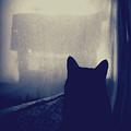 Watching The Feeder by Krista Carofano