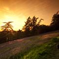 Watching The Sunset by Angel Ciesniarska