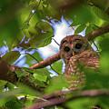 Watching Through The Trees by Rick Berk