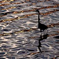 Water Bird Series 17 by Stephen Poffenberger