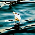 Water Bird Series 33 by Stephen Poffenberger