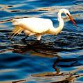 Water Bird Series 34 by Stephen Poffenberger