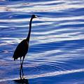 Water Bird Series by Stephen Poffenberger