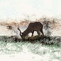 water buck in Addo Park S.A. by Ronald Rosenberg