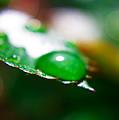 Water Diamonds 7  by Alex Art and Photo