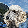 Water Dog by Joey Nash