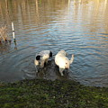 Water Dogs by Karen Capehart