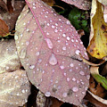 Water Drops 2 by Lyle Crump