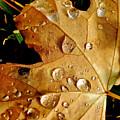 Water Drops by Liz Vernand