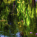 Water Dwellers by Jon Burch Photography