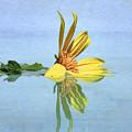 Water Flower by Nadia Sanowar