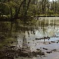 Water Garden Lake View by Iris Posner