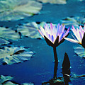 Water Glow by Steve Karol