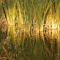 Water Grass In Sunset by Rob Hans