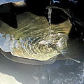 Water In The Shell by Eva-Maria Di Bella