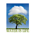 Water Is Life by Mal Bray