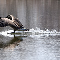 Water Landing by Mark Madion