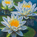Water Lilies 12 - Fire And Ice by Fiona Craig