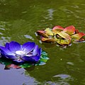 Water Lilies 3 by Phyllis Spoor