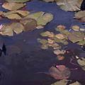 Water Lilies by Betty Jean Billups