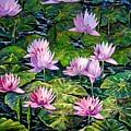 Water Lilies by Caroline Street