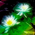 Water Lilies  by Christopher Saleh