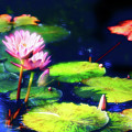 Water Lilies by Harry Spitz