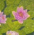 Water Lilies Lily Flowers Lotuses Fine Art Prints Contemporary Modern Art Garden Nature Botanical by Baslee Troutman