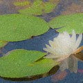 Water Lilly At Borderland by Bill McEntee