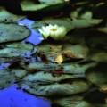 Photo For Monet by John Feiser