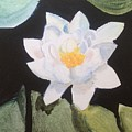 Water Lily 4 by Katherine  Berlin