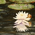 Water Lily And Pads by Shirley Sykes Bracken