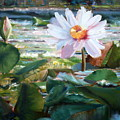 Water Lily by Andriane Georgiou