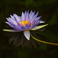 Water Lily Close Up by Garry Gay