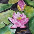 Water Lily by Derek Mccrea