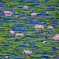 Water Lily Flowers Happy Water Lilies Fine Art Prints Giclee High Quality Impressive Color Lotuses by Baslee Troutman