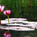 Water Lily by Greg Patzer