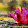 Water Lily - Id 16235-220419-3506 by S Lurk