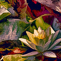 Water Lily In Living Color by Geraldine Scull