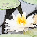 Water Lily by Modern Art