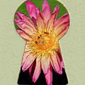 Water Lily Keyhole by Steve Edwards