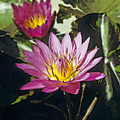 Water Lily by Maria Heyens