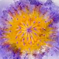Water Lily by Mary Koutzarov