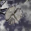 Water Lily Pad by Viktor Savchenko