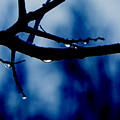 Water On Branch by Craig Walters