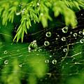 Water Orbs In Cobweb. by Elena Perelman