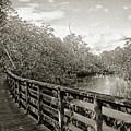 Water Path by Sean Dorazio