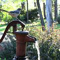 Water Pump by Sarah Houser
