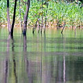 Water Reflections On Amazon River by HQ Photo